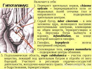 Подталамическая область, regio subthalamica – участок серого вещества, лежащий п