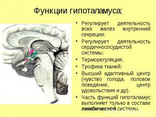 Функции гипоталамуса: Регулирует деятельность всех желез внутренней секреции; Ре