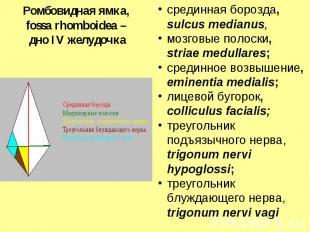 срединная борозда, sulcus medianus, мозговые полоски, striae medullares; срединн