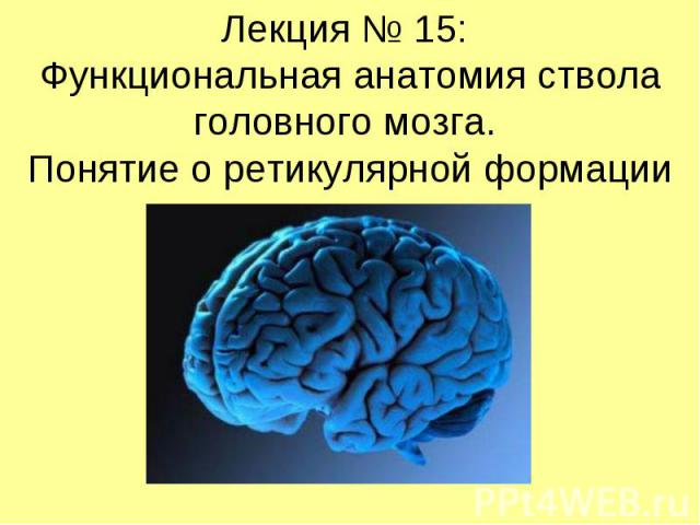 Лекция № 15: Функциональная анатомия ствола головного мозга. Понятие о ретикулярной формации