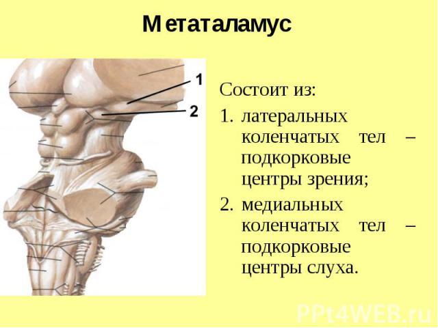 Метаталамус Состоит из: латеральных коленчатых тел – подкорковые центры зрения; медиальных коленчатых тел – подкорковые центры слуха.