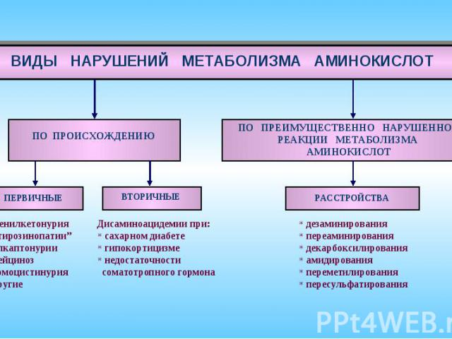 """ВИДЫ НАРУШЕНИЙ МЕТАБОЛИЗМА АМИНОКИСЛОТ ПО ПРОИСХОЖДЕНИЮ ПО ПРЕИМУЩЕСТВЕННО НАРУШЕННОЙ РЕАКЦИИ МЕТАБОЛИЗМА АМИНОКИСЛОТ фенилкетонурия """"тирозинопатии"""" алкаптонурии лейциноз гомоцистинурия другие Дисаминоацидемии при: сахарном диабете гипокортицизме не…"""