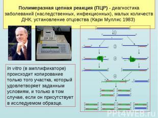 In vitro (в амплификаторе) происходит копирование только того участка, который у