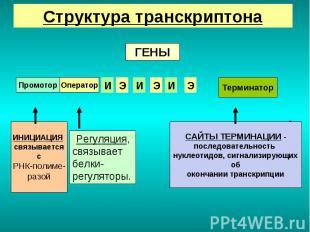 Genes Регуляция, связывает белки-регуляторы. sequence of nucleotides giving the