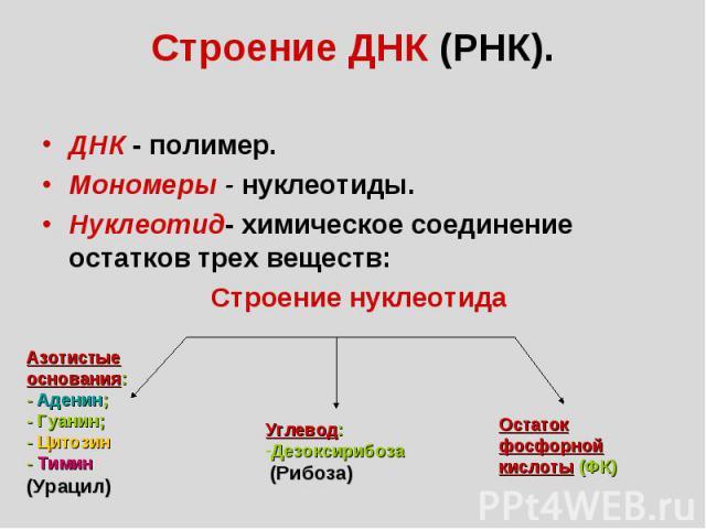Строение нуклеотида Азотистые основания: - Аденин; - Гуанин; - Цитозин - Тимин (Урацил) Углевод: Дезоксирибоза (Рибоза) Остаток фосфорной кислоты (ФК) Строение ДНК (РНК). ДНК - полимер. Мономеры - нуклеотиды. Нуклеотид- химическое соединение остатко…