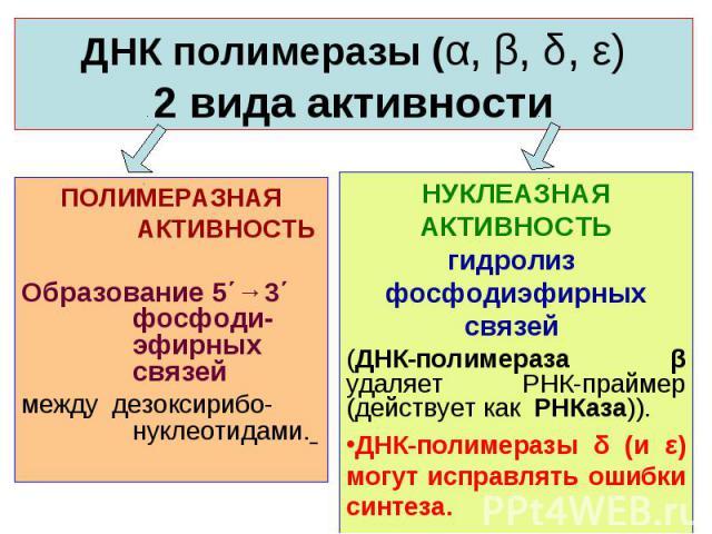 НУКЛЕАЗНАЯ АКТИВНОСТЬ гидролиз фосфодиэфирных связей (ДНК-полимераза β удаляет РНК-праймер (действует как РНКаза)). ДНК-полимеразы δ (и ε) могут исправлять ошибки синтеза. ПОЛИМЕРАЗНАЯ АКТИВНОСТЬ Образование 5΄→3΄ фосфоди-эфирных связей между дезокс…