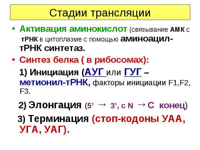 Стадии трансляции Активация аминокислот (связывание АМК с тРНК в цитоплазме с помощью аминоацил-тРНК синтетаз. Синтез белка ( в рибосомах): 1) Инициация (АУГ или ГУГ – метионил-тРНК, факторы инициации F1,F2, F3. 2) Элонгация (5' → 3', c N →C конец) …