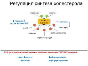Регуляция синтеза холестерола глюкагон синтез фермента Субстратно-гормональный м