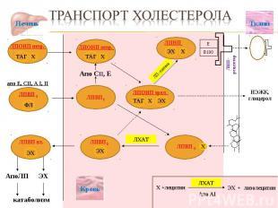 ЛПВП 1 ЛП-липаза Ткани АпоЛП ЭХ катаболизм Апо CII, E Печень НЭЖК, глицерол ЛХАТ