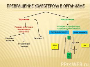 Витамин D Стероидные гормоны Желчные кислоты Реакция окисления, повышающая поляр