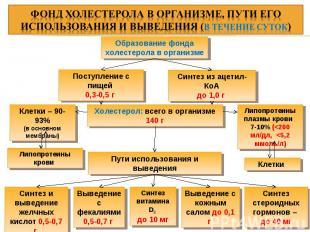 Образование фонда холестерола в организме Поступление с пищей 0,3-0,5 г Синтез и