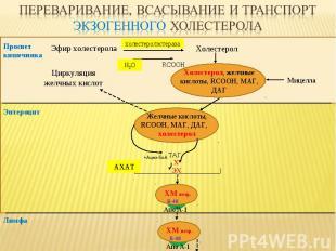 Эфир холестерола Холестерол RCOOH Просвет кишечника ТАГ, Х ЭХ Лимфа Апо А-1 B-48