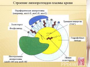 Строение липопротеидов плазмы кровиПериферические апопротеины (например, апоА-II