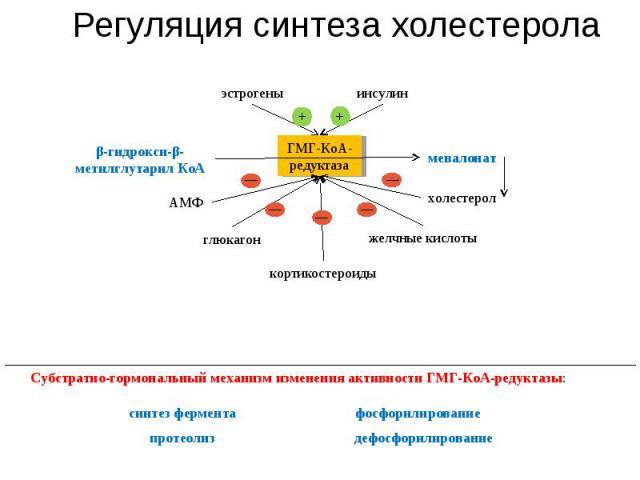Регуляция синтеза холестерола глюкагон синтез фермента Субстратно-гормональный механизм изменения активности ГМГ-КоА-редуктазы: эстрогены инсулин АМФ кортикостероиды желчные кислоты холестерол мевалонат ГМГ-КоА-редуктаза β-гидрокси-β-метилглутарил К…