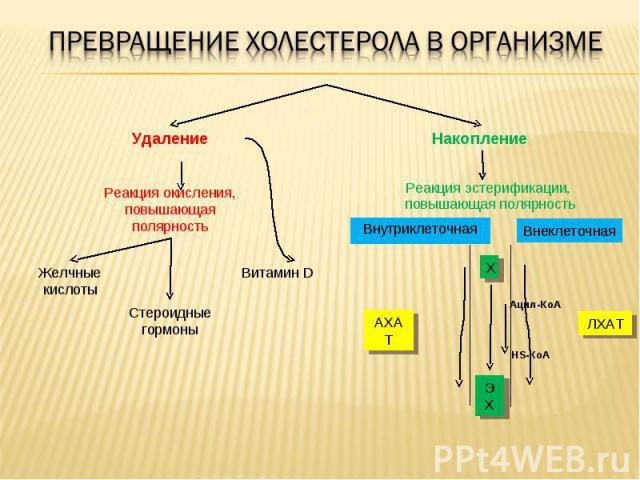 Витамин D Стероидные гормоны Желчные кислоты Реакция окисления, повышающая полярность Накопление Удаление ЭХ Х АХАТ ЛХАТ Ацил-КоА HS-КоА Реакция эстерификации, повышающая полярность Внутриклеточная Внеклеточная
