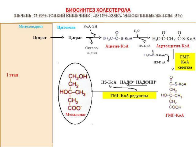 I этап Оксало-ацетат KoА-SH Цитрат Цитрат ГМГ-КоА синтаза НАДФНН+ HS-KoA НАДФ+ ГМГ-КоА редуктаза Митохондрия Ацетил-КоА Н2О HS-KoA Ацетоацетил-КоА ГМГ-КоА HS-KoA Мевалонат Цитозоль