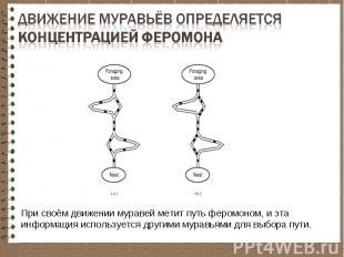 При своём движении муравей метит путь феромоном, и эта информация используется д