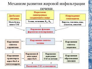 Причины развития ожирения Первичное ожирение 1. Алиментарный дисбаланс (избыточн