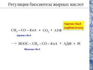 Регуляция биосинтеза жирных кислот CH3 – CO – KoA CO2 АТФ + + Ацетил-КоА карбокс