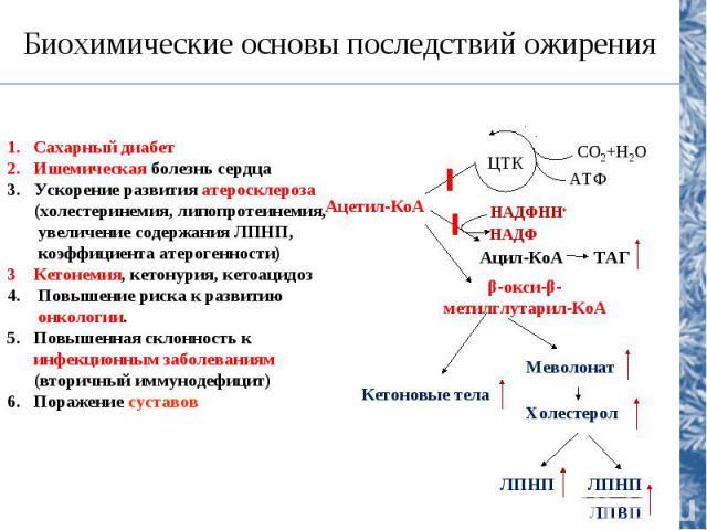 Гиперлипопротеинемии Тип и название дислипопротеинемии Генетический дефект Проявления Коррекция Первичные (врожденные нарушения) Тип III (семейная комбинирован-ная гиперлипидемия) Дефект в структуре апо Е, синтез изо-формы апо Е2, кото-рая плохо вза…
