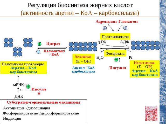 Глюкагон Адреналин Цитрат Пальмитоил - КоА Неактивные протомеры Ацетил – КоА карбоксилазы мРНК ДНК Инсулин Активная (Е – ОН) Ацетил –КоА карбоксилаза Неактивная (Е – ОР) Ацетил – КоА карбоксилаза Регуляция биосинтеза жирных кислот (активность ацетил…