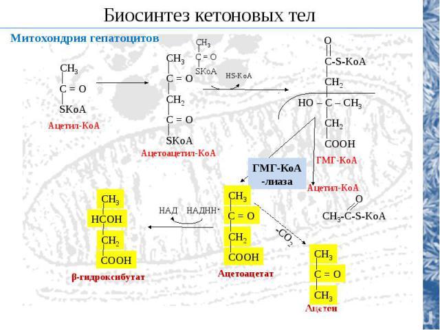 Механизм развития жировой инфильтрации печени Дисбаланс питания Мало белка, много ТАГ Недостаток липотропных соединений в пище Холин, метионин, В12, В10 Повреждение гепатоцитов Вирусы, токсины, яды, алкоголь, никотин Нарушение функции ферментов мети…