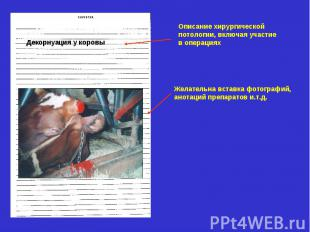 Описание хирургической потологии, включая участие в операциях Декорнуация у коро