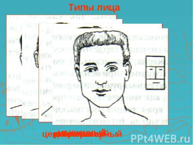 Типы лица церебральный респираторный дигестивный мышечный