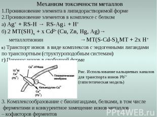 Механизм токсичности металлов 1.Проникновение элемента в липидорастворимой форме