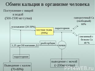 Выведение с калом (70-80%) Обмен кальция в организме человека Поступление с пище
