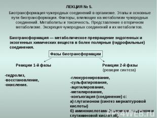 ЛЕКЦИЯ № 5. Биотрансформация чужеродных соединений в организме. Этапы и основные