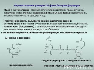 Ферментативные реакции 2-й фазы биотрансформации Фаза ll метаболизма - этап биол