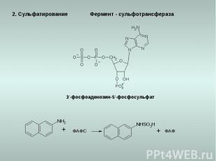2. Сульфатирование 3'-фосфоаденозин-5'-фосфосульфат ФАФС ФАФ Фермент - сульфотра