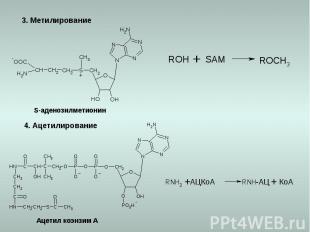3. Метилирование 4. Ацетилирование S-аденозилметионин Ацетил коэнзим А КоА АЦКоА