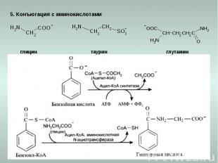 5. Конъюгация с аминокислотами глицин таурин глутамин