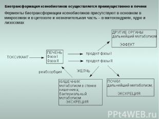 Биотрансформация ксенобиотиков осуществляется преимущественно в печени Ферменты