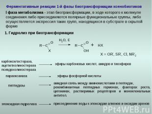 Ферментативные реакции 1-й фазы биотрансформации ксенобиотиков карбоксилэстераза