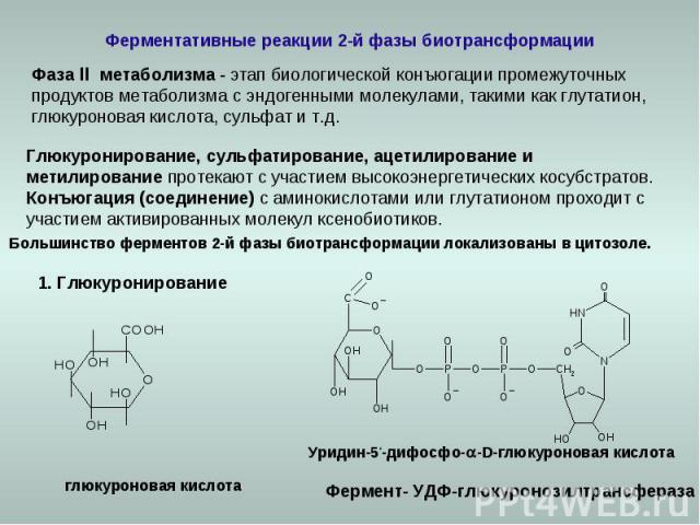 Ферментативные реакции 2-й фазы биотрансформации Фаза ll метаболизма - этап биологической конъюгации промежуточных продуктов метаболизма с эндогенными молекулами, такими как глутатион, глюкуроновая кислота, сульфат и т.д. Глюкуронирование, сульфатир…