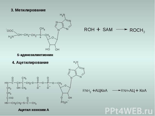 3. Метилирование 4. Ацетилирование S-аденозилметионин Ацетил коэнзим А КоА АЦКоА -АЦ