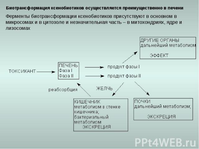 Биотрансформация ксенобиотиков осуществляется преимущественно в печени Ферменты биотрансформации ксенобиотиков присутствуют в основном в микросомах и в цитозоле и незначительная часть – в митохондриях, ядре и лизосомах
