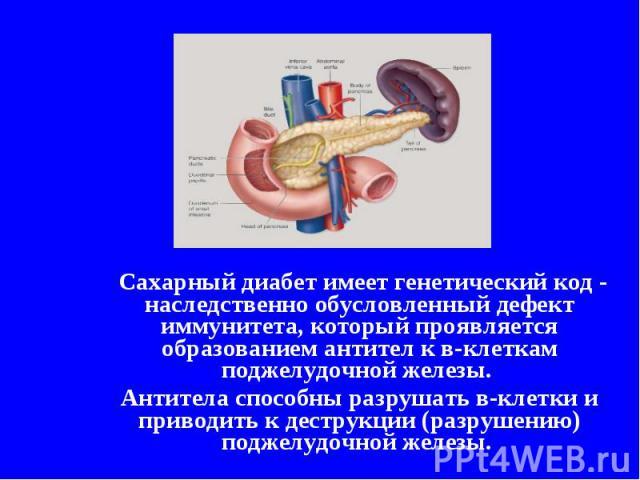 Сахарный диабет имеет генетический код - наследственно обусловленный дефект иммунитета, который проявляется образованием антител к в-клеткам поджелудочной железы. Антитела способны разрушать в-клетки и приводить к деструкции (разрушению) поджелудочн…