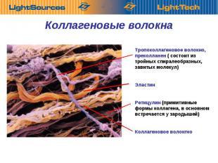 Коллагеновые Тропоколлагеновое волокно, преколланен ( состоит из тройных спирале