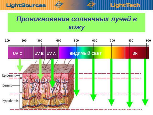100 200 300 400 500 600 700 800 900 UV-C UV-B UV-A ВИДИМЫЙ СВЕТ ИК Проникновение солнечных лучей в кожу