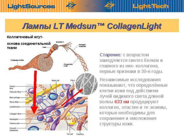 Старение: с возрастом замедляется синтез белков и главного из них- коллагена, первые признаки в 30-е годы. Независимые исследования показывают, что определённые клетки кожи под действием лучей видимого света длиной волны 633 нм продуцируют коллаген,…