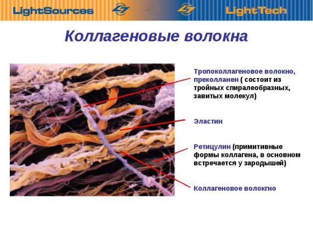 Коллагеновые Тропоколлагеновое волокно, преколланен ( состоит из тройных спиралеобразных, завитых молекул) Эластин Ретицулин (примитивные формы коллагена, в основном встречается у зародышей) Коллагеновое волокгно Коллагеновые волокнаволокна
