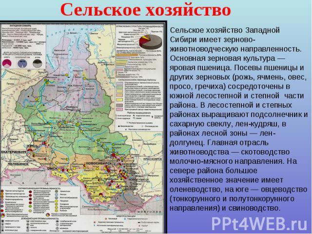 Сельское хозяйство Сельское хозяйство Западной Сибири имеет зерново-животноводческую направленность. Основная зерновая культура — яровая пшеница. Посевы пшеницы и других зерновых (рожь, ячмень, овес, просо, гречиха) сосредоточены в южной лесостепной…