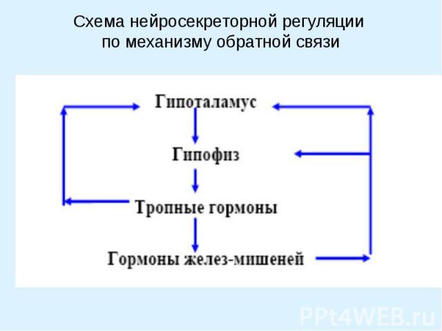 Схема нейросекреторной регуляции по механизму обратной связи
