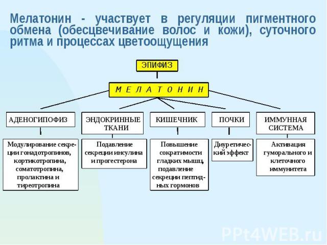 Мелатонин - участвует в регуляции пигментного обмена (обесцвечивание волос и кожи), суточного ритма и процессах цветоощущения
