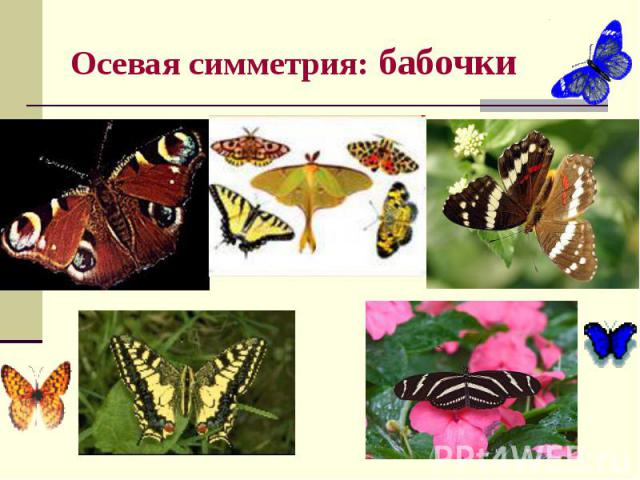 Осевая симметрия: бабочки