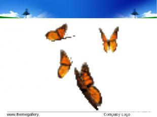 Не срывай цветок – он увянет. Не лови бабочку – она погибнет. Красоту можно восп